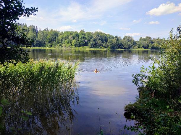 Schwimmen statt duschen in einem finnischen See