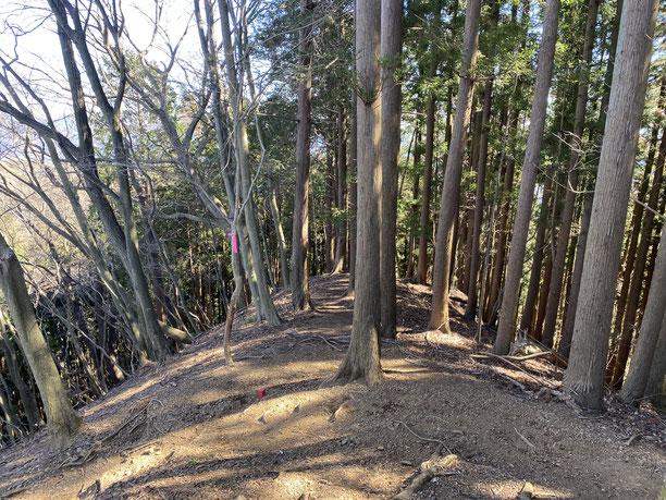 伊豆ヶ岳から古御岳に向かう尾根道