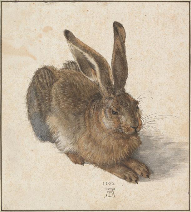 Le lièvre, aquarelle et gouache d'Albrecht Dürer réalisée en 1502 et considérée à juste titre comme un de ses chefs-d'œuvre d'observation de la nature