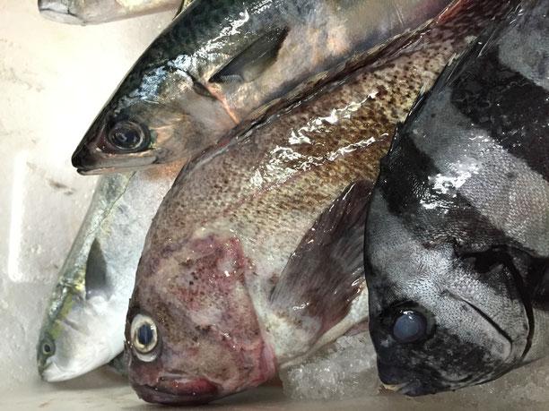 イグレックの近海、富来の西海(さいかい)漁港からの新鮮な海の恵みです!