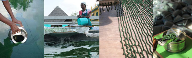 #spirulina kaufen #spriulina bio #spirulina wirkung #spirulina zusammensetzung #spirulina schweiz #spirulina organic kaufenspanwen