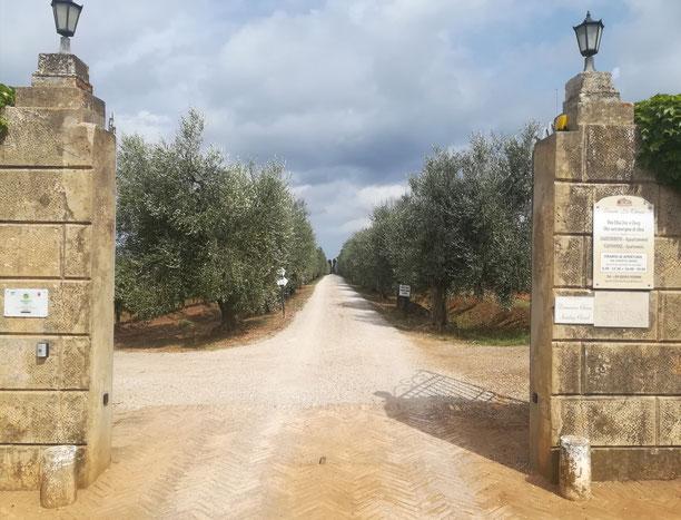 Tenuta la Chiusa Elba isola Etesiaca itinerari di vino