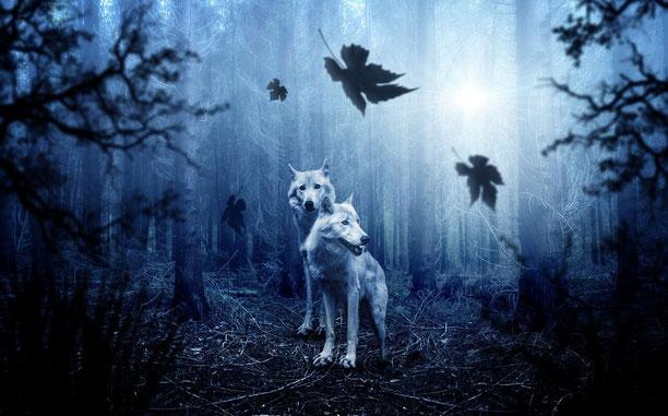 2 weiße Wölfe im Wald, kühles Mondlicht