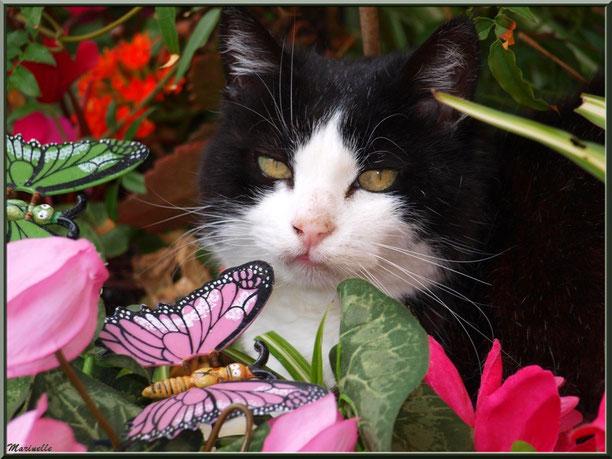chat entre fleurs et papillons
