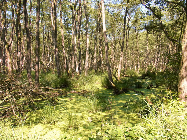 Darßer Urwald mit dem Fahrrad von der Ferienwohnung Seegras in Prerow