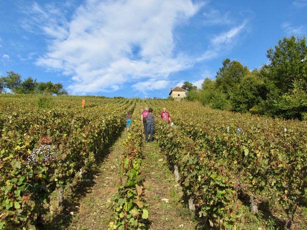 Frankreich: Weinberge im Burgund
