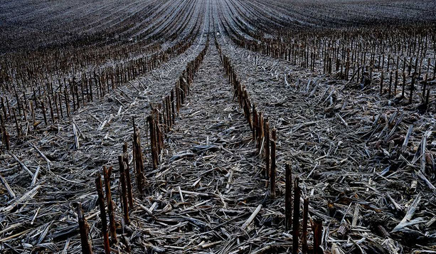 Un matin d'hiver, en traversant ce champ de maïs laissé en repos j'ai repensé aux paysages tristes peints par Anselm Kieffer.