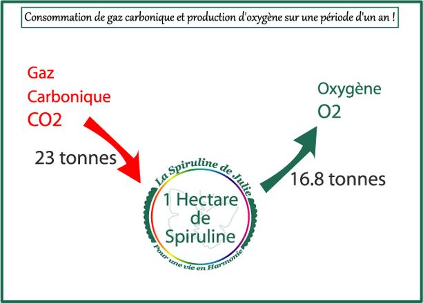 Spiruline consommatrice gaz carbonique productrice oxygène
