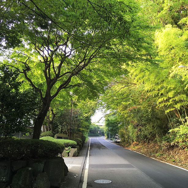 先日宿泊したブックホテル「箱根本箱」の周辺を朝、散歩していた時の光景です・・・緑が重なる様子が美しい。高原の別荘地の道って、その清涼感みたいなものはどこも共通しているんだなぁって。こういう山道を毎日くぐって胸を広げていた長野赴任時代の暮らしを想い出すことができ、自分を取り戻すような機会になりました。