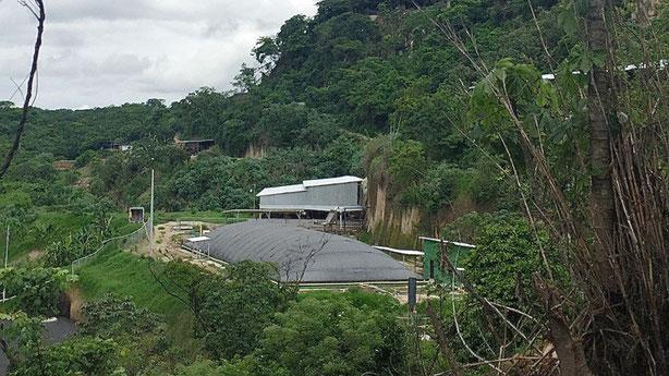 Biodigestor purines de cerdo - covered lagoon digester for pig manure