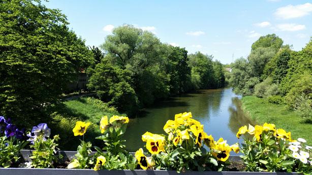 Kurz vor Munderkingen - Blick auf die Donau...