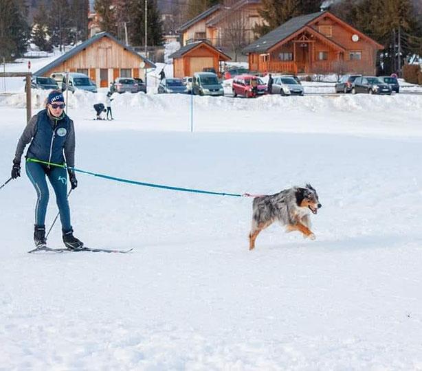 Baudrier et longe : Inlandsis  ; Harnais manmat lightweight S, Skis Innovik - Skijoring
