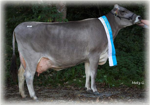 Jublend-Tochter von Robert Geiger aus Eschach bei Füssen. Champion-Kuh der BZG Schau 2009
