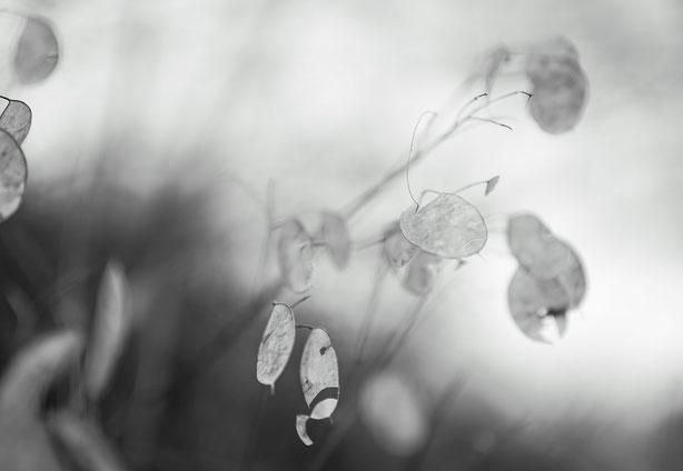 WabiSabi by Michael Finndorf Fotografie