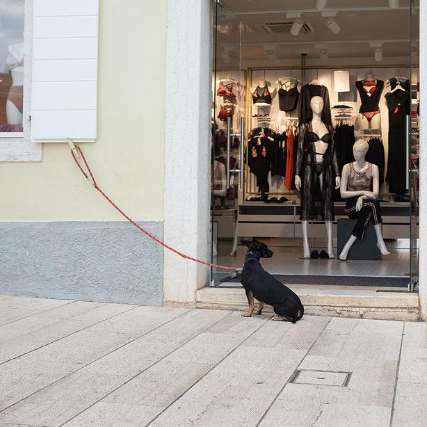dog before dessous shop, Hund vor Unterwäschegeschäft, Dessous, Hund, angeleint, wartet, waiting, hereinschauen, look in,