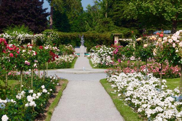 Rosenengel mitten im Beet Bodensee Insel Mainau Rosentraum