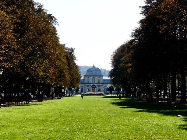 Kastanienallee Bonn, vom Hofgarten zum Poppelsdorfer Schloss