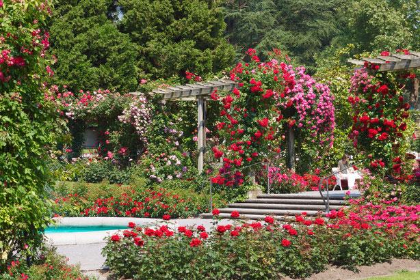 Insel Mainau Pergolen überwuchert mit Rosen und Wasserspiele einfach herrlich