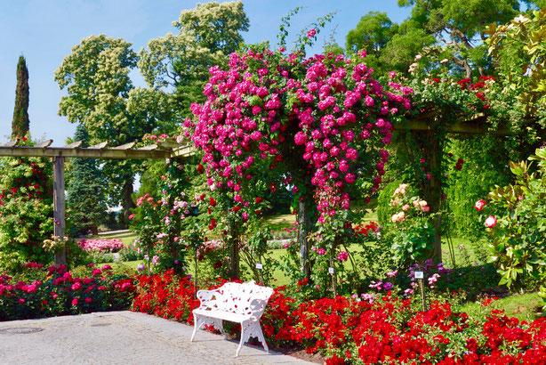 Insel Mainau: Die überbordenden Pergolen im italienischen Garten sind atemberaubend schön