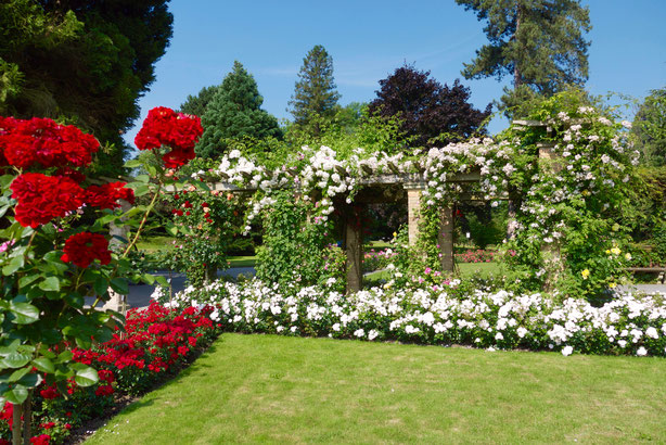 Insel Mainau weiße Rosen Pergola