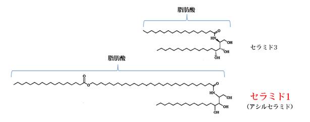 超長鎖脂肪酸 セラミド
