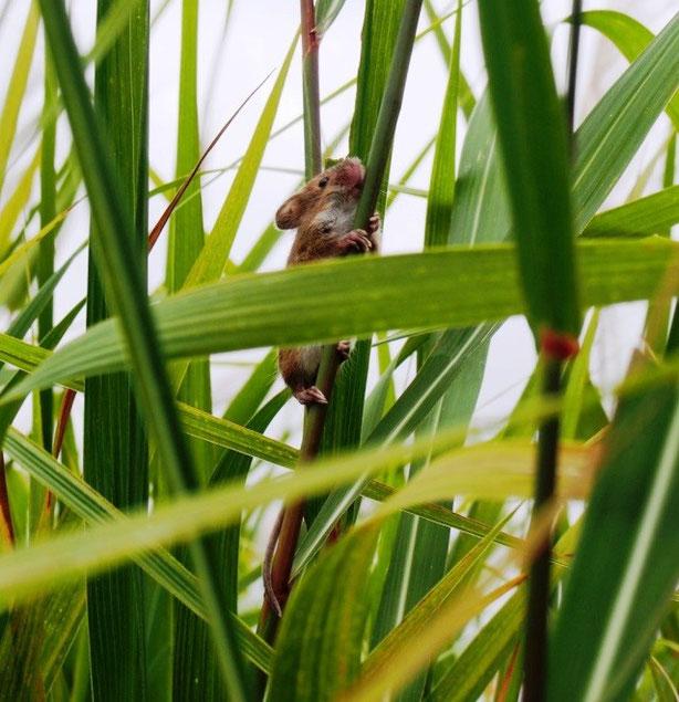 生態撮影は至難の業(奈良市)