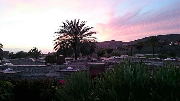 freaky finance, freaky travel, Gran Canaria, Reisebericht, Palme, Sonnenuntergang