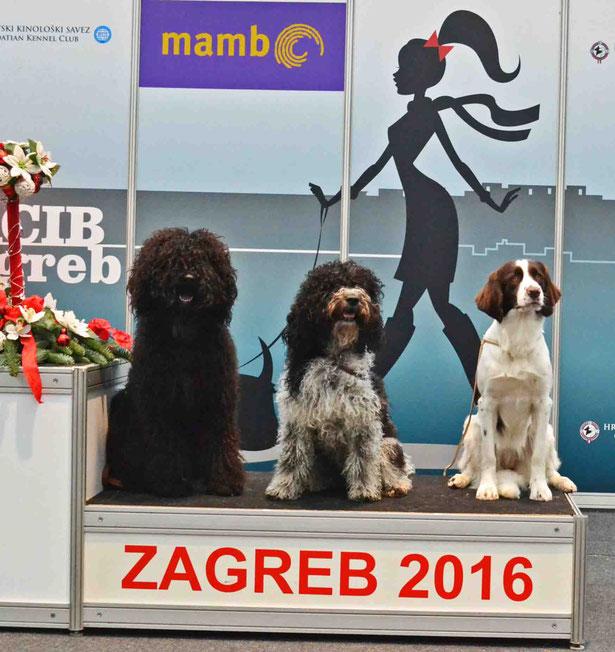 die VAP Hunde des VBBFL von links: Jacko, Pepsi, Annika