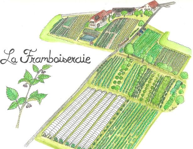 La Framboiseraie, dessin au microfeutre et crayons aquarellables par Emeline B., saisonnière en 2018