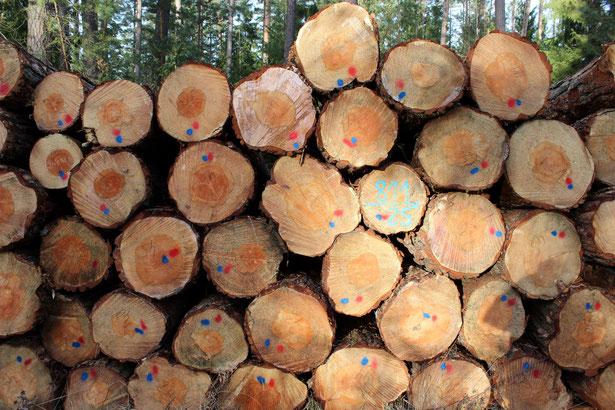 …Holzentnahme das gesamte Jahr, Jahr für Jahr…