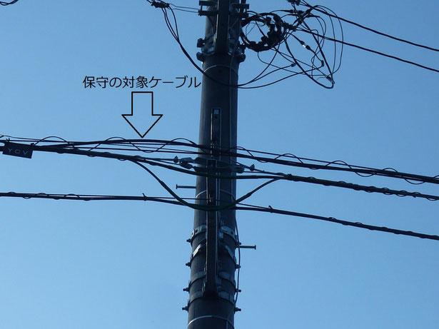 電柱に共架している通信ケーブル