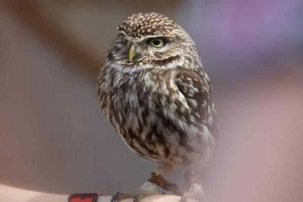 Kluger Vogel schaut nicht ganz in die Kamera.
