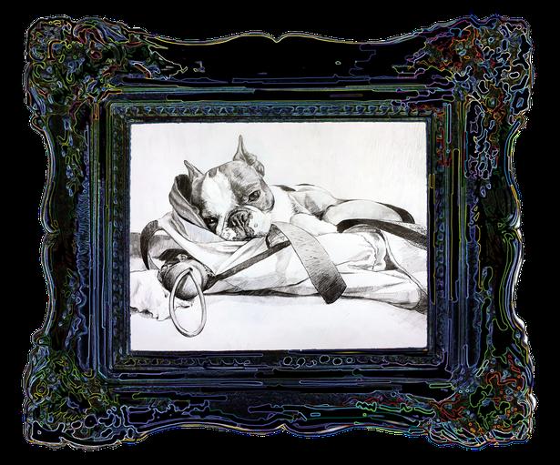 Tierportrait eines Boston Terrier, Foto von Französische Bulldogge, Hund, dies ist Kunst im Rahmen, besonders edel, Hunderasse, Barfen