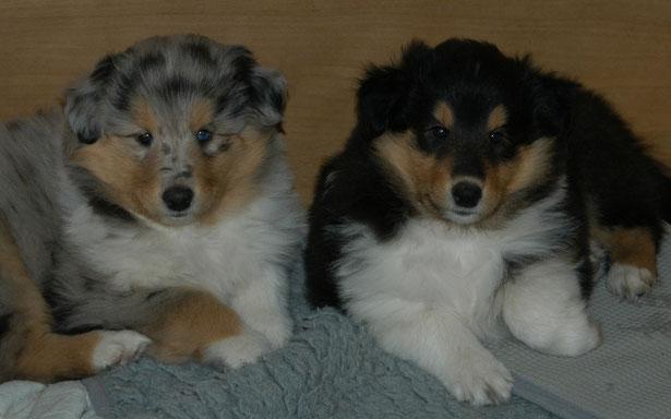 Pamina und Pacco ca. 6 Wochen alt