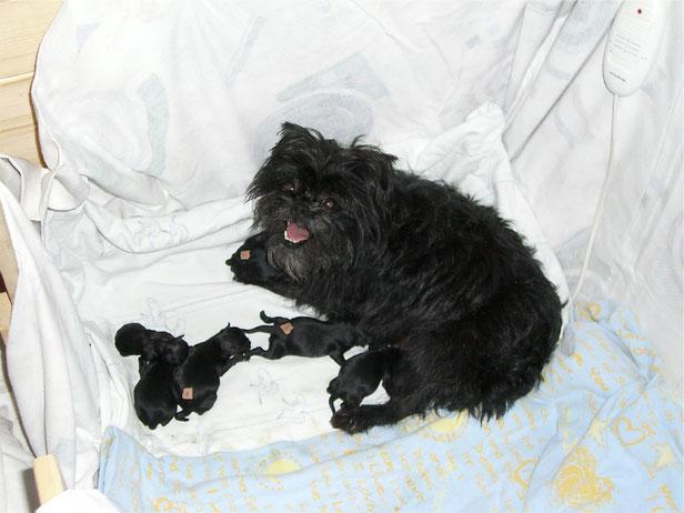 """Clara mit ihrem Nachwuchs am Tag der Geburt - einige der Welpen haben wir mit ihrer """"Startnummer"""" auf dem Rücken gekennzeichnet."""