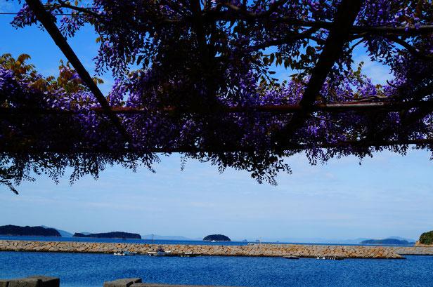 背景が瀬戸内海の海という絶景のお散歩コースです。