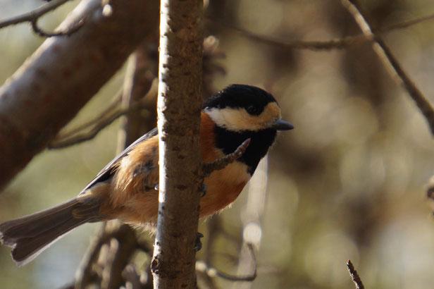 かわいい小鳥ちゃんを発見。深山公園には野鳥もたくさんいますね。