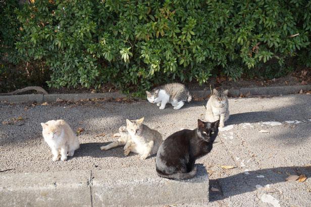 駐車場に戻るとやっぱり猫だらけ。猫好きな人にはお勧めの王子が岳です。