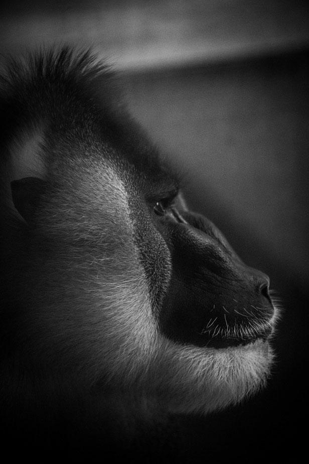 porträt-fotograf in münchen | florian paulus