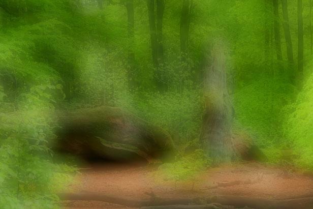 Verwunschener Saba-Urwald