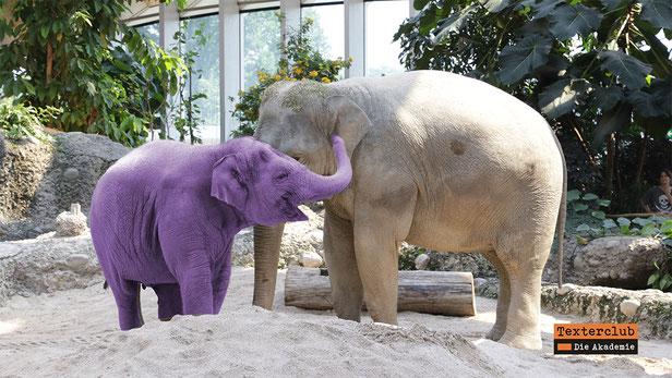 Elefantenmutter mit lila Elefantenbaby, Foto Matthias Horber, 9011 St. Gallen, Schweiz