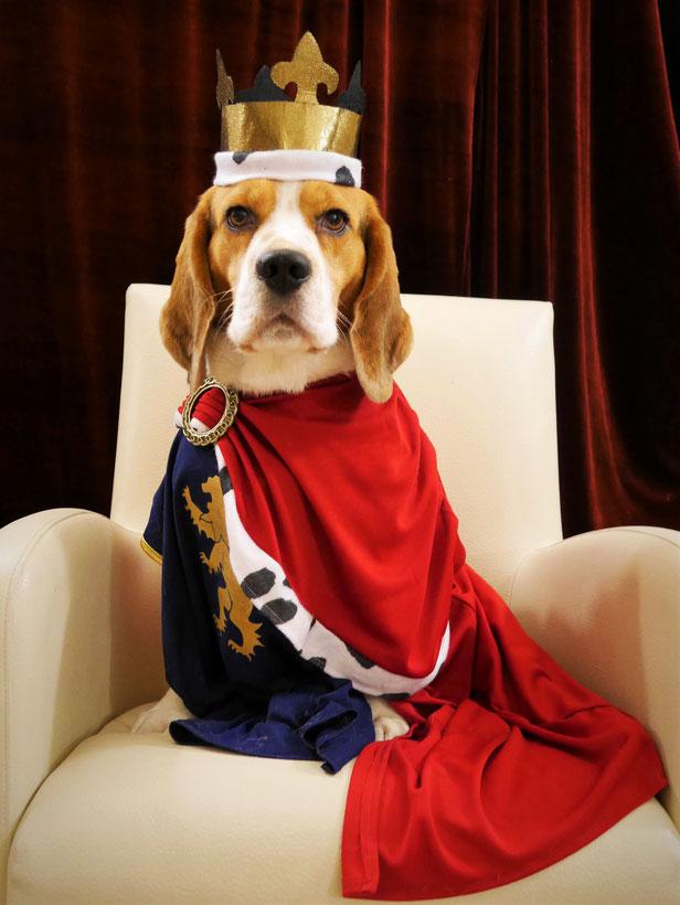 Little King Arthur a Wisp of my Desire, Bagio Boss Gintarinė Fortūna * Lord James, Czarnowsky Beagle