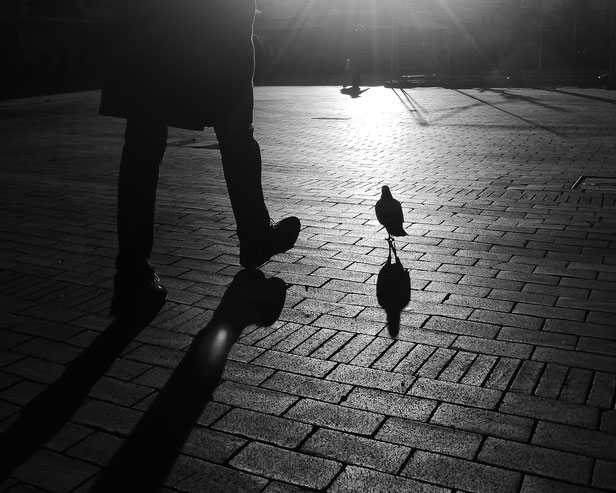 Dove and Man, Taube und Mann, Seite an Seite, side by side, monocrome, black and white, picture, togehter, friends for seconds, Schwarzweissfotografie, kreative Fotografie, Fototipps, La Bonn heure,