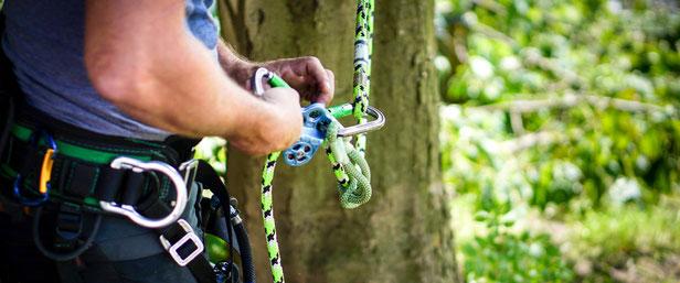 Tree Pruning Worcester