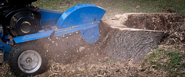 Tree Stump Grinding Worcester