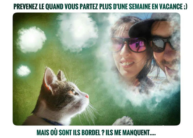 chat,vacance,communication animale