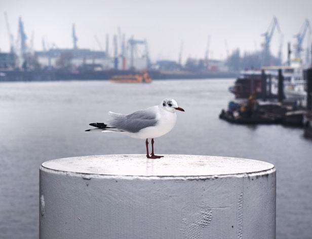 Möwe, Elbphilharmonie, Elfie, Hamburg, maritim, Hafen, Poller, Boote, Yachten, Kran, Kräne