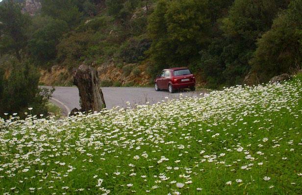 Kretische Blumenwiese auf der Bergstraße Istron-Jierapetra