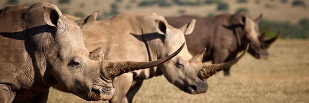 Laikipia Plateau Kenya Safari