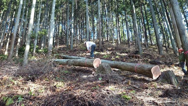 自ら選んだ木を大黒柱にして木の家をつくる